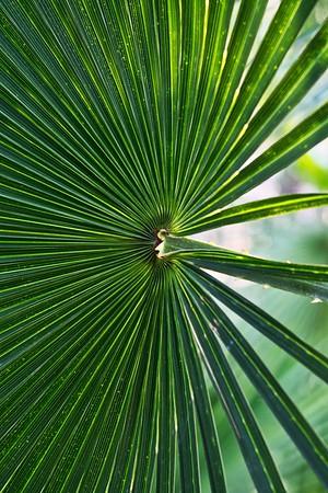 Big ole palm tree leaves