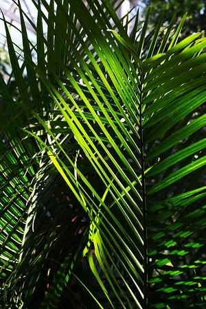 Big ole leafs