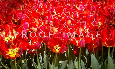 This was taken with my phone in the Bellagio Conservatory