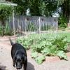 Molly near the vegetable garden bringing me her monkey