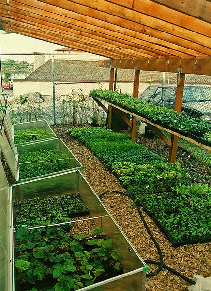 Greenhouse-9