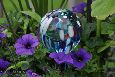 Purple Petunias and Water Ball (4x6)-- DSC_2936