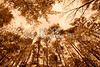 Scenic Forest Trees from East Texas Photograph Picture Fine Art Prints 4098.03