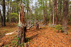 Scenic Forest Trees from East Texas Photograph Picture Fine Art Prints 4101.02