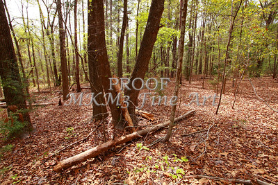 Scenic Forest Trees from East Texas Photograph Picture Fine Art Prints 4102.02
