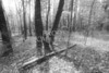 Scenic Forest Trees from East Texas Photograph Picture Fine Art Prints 4102.03