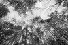 Scenic Forest Trees from East Texas Photograph Picture Fine Art Prints 4099.02