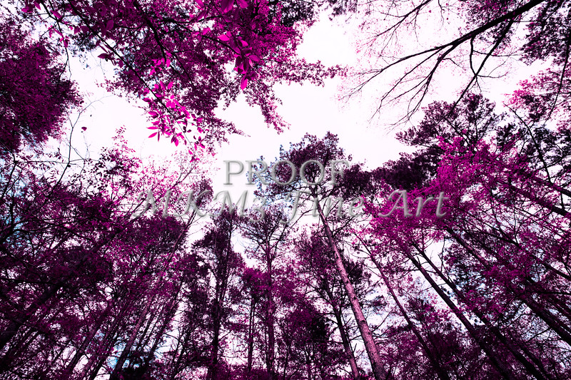 Scenic Forest Trees from East Texas Photograph Picture Fine Art Prints 4097.02