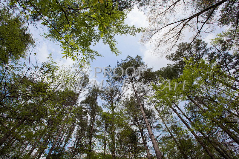 Scenic Forest Trees from East Texas Photograph Picture Fine Art Prints 4100.02