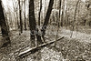Scenic Forest Trees from East Texas Photograph Picture Fine Art Prints 4102.01