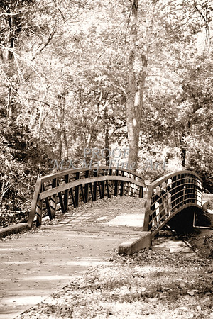 Autumn Footbridge Monochrome