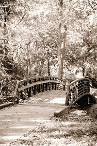 Autumn Footbridge Monochrome