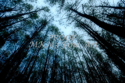 Moonlite Forest