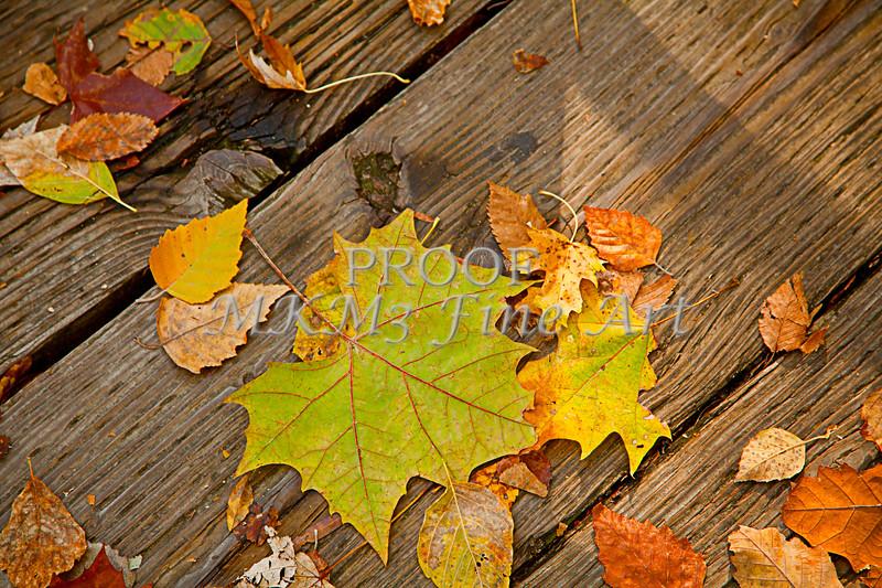 Fall season leaf