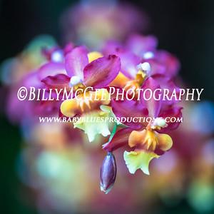 Longwood Flower Gardens Orchids - 28 Jan 2017