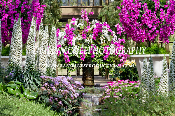 Longwood Flower Gardens - International Orchid Show & Sale - 25 Mar 2011