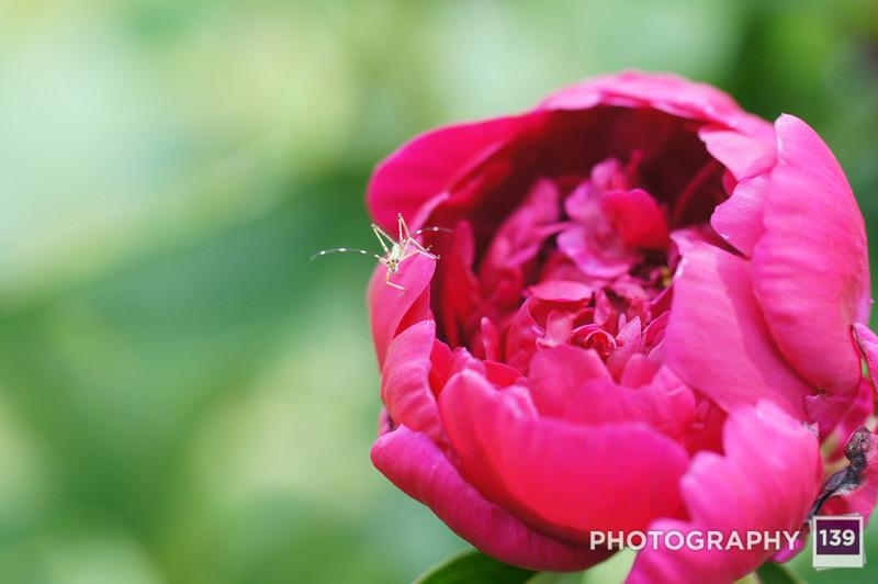 Whispering Beauty - 2012