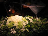 Lilies and roses on a coffin; fiddle in background