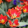 Phipps Spring Flower Show, 2009