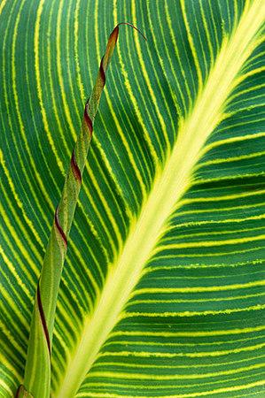 LeafWStem