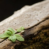A little plant growing out of a dead log