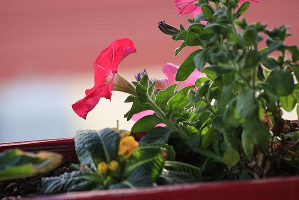 Plants / Flowers