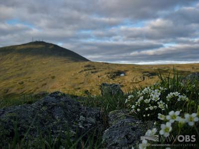 Spring Scene From Mt. Monroe