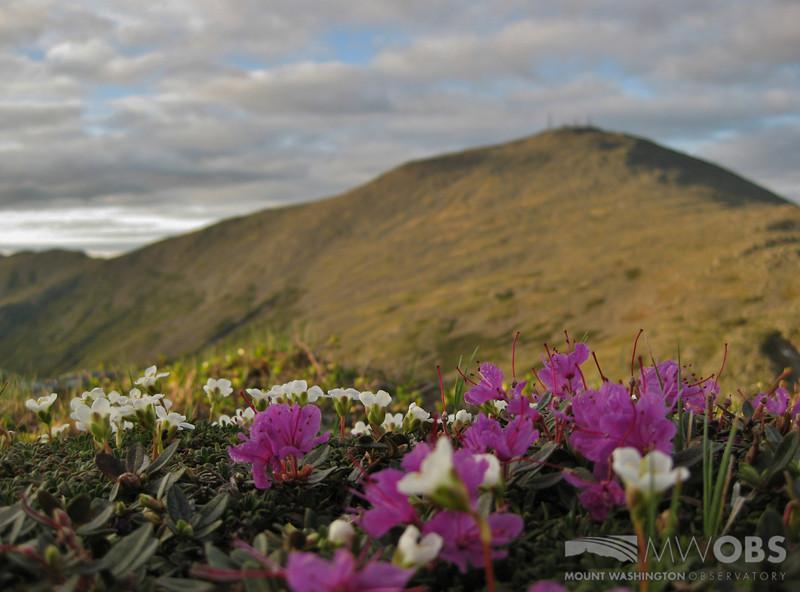 Spring Scene From Mt Monroe