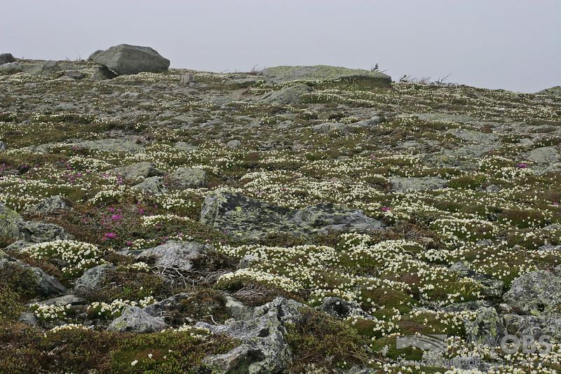 Alpine Garden View