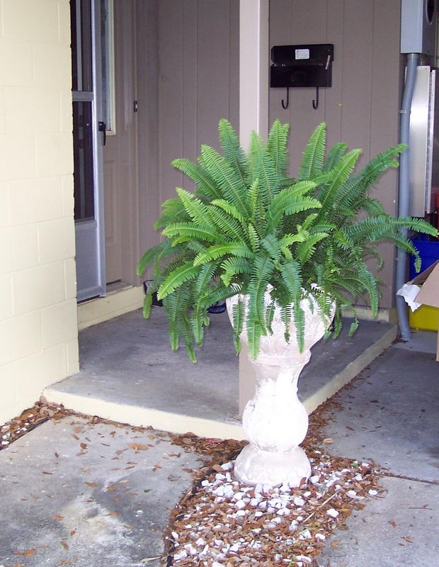 Kimberly Fern by our front door