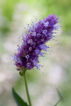 Flowers, Plants & Wildflowers