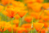 Tangerine Breeze