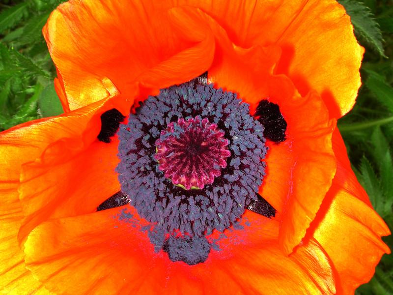 "poppy 69  <a href=\""http://www.tabblo.com/studio/stories/view/254773/\"">www.tabblo.com/studio/stories/view/254773/</a>"