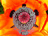 "poppy 67  <a href=""http://www.tabblo.com/studio/stories/view/254795/\"">www.tabblo.com/studio/stories/view/254795/</a>"