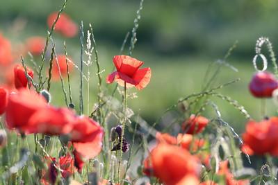 Poppys_Morges_08062019 (39)
