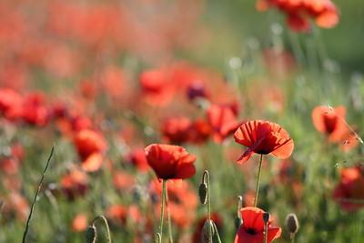 Poppys_Morges_08062019 (14)