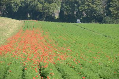 2014 Poppys