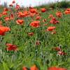 Poppys_La-Chaux_28092014 (14)