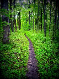 Three Lakes Trail - Morgan-Monroe State Forest, IN
