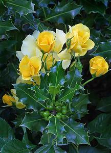 Portland Rose Garden 10 (62769778)