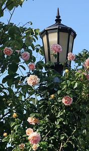Portland Rose Garden 1 (62762088)