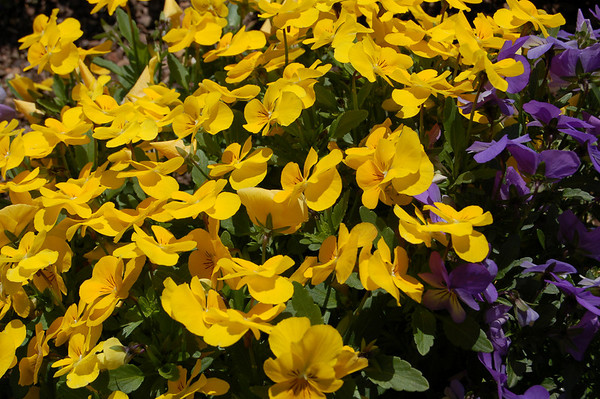 Purdy Flowers