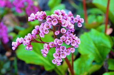 Petite Pink & Purple Flowers
