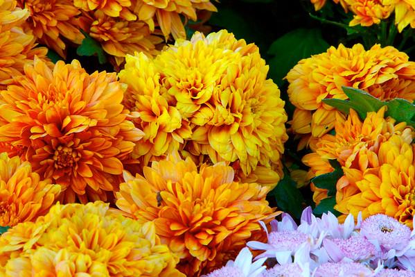 ROGERS GARDEN(BEAUTIFUL FLOWERS IN NOVEMBER!!!)11-10-07