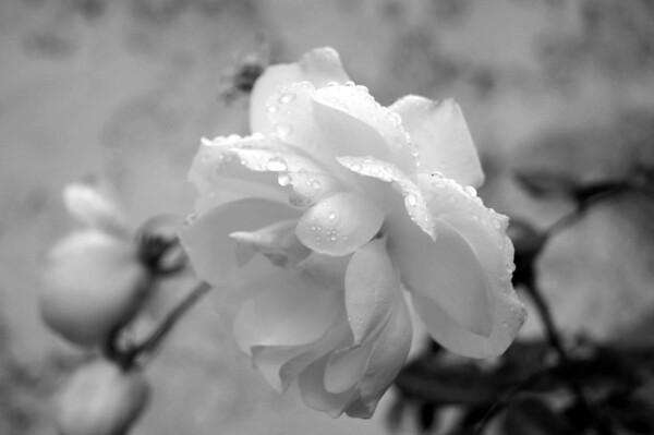rainy day flowers