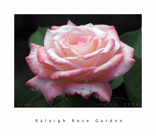 Raleigh Rose Garden 2009