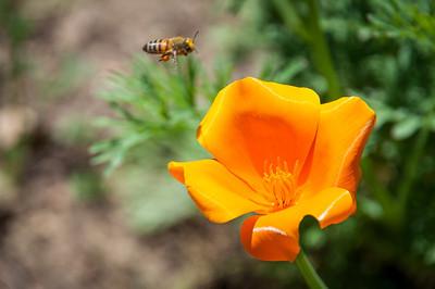 2012-03-14 Rancho Santa Ana BG-8001