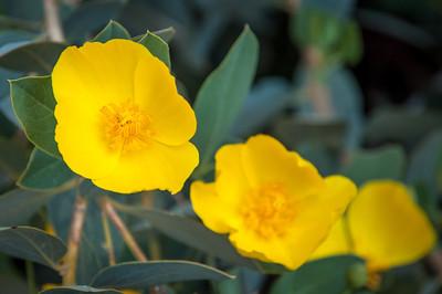 2012-03-14 Rancho Santa Ana BG-7954