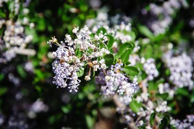 2012-03-14 Rancho Santa Ana BG-7958