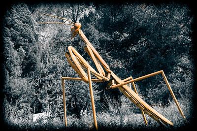 2012-03-14 Rancho Santa Ana BG-7909